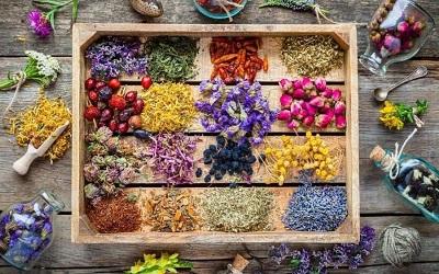 تاریخچه گیاهان دارویی